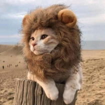 Funny Wig for Cat Dress Up Hat for Pets